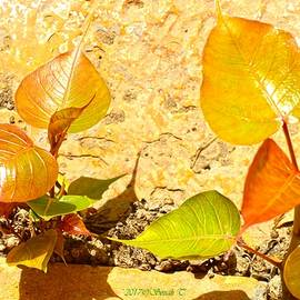 Sonali Gangane - Golden Bodhi leaves