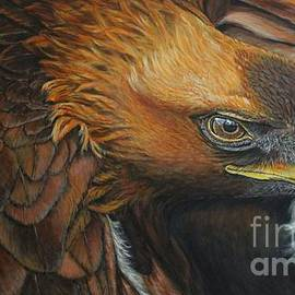 Golden Eagle by Bob Williams