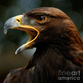 Golden Eagle Call by Sue Harper