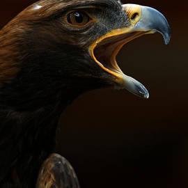 Sue Harper - Golden Eagle - Gift of Nature