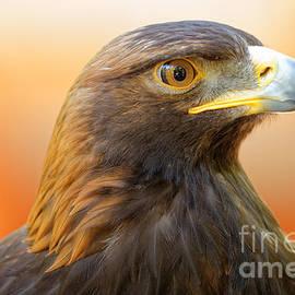 Sue Harper - Golden Eagle - Messenger of the Gods