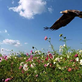 Thomas Pollart - Golden Eagle, Prairie Flowers