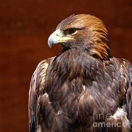 Sue Harper - Golden Eagle - Royalty