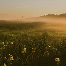 Angelo Marcialis - Golden Fog Sunrise At The Refuge