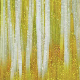 Golden Forest by Jack Zulli