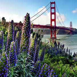 Golden Gate Flowers - Sean Davey