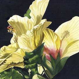 Golden Hibiscus by Alfred Ng
