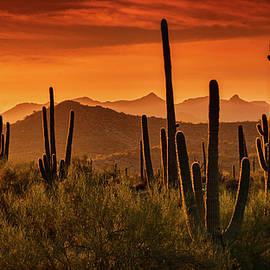 Golden Hills at Sunset  by Saija Lehtonen