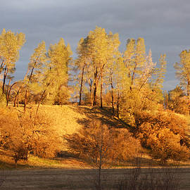 Golden Hour of Fall by Art Block Collections
