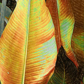 Barbara Zahno - Golden Leaves
