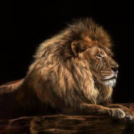 Golden Lion - David Stribbling