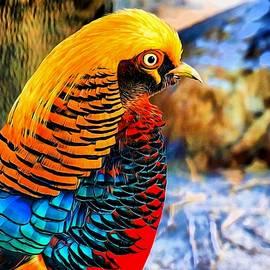 Lilia D - Golden Pheasant Painterly