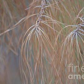 Maria Urso - Golden Pines Abstract