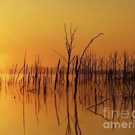 Roger Becker - Golden Reflections