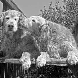 Jennie Marie Schell - Golden Retrievers the Kiss Black and White