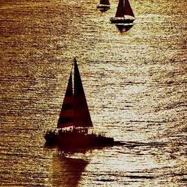 Golden Sails  by Debra Banks