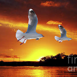 Geoff Childs - Golden seagull Ocean Sunset. Original exclusive photo art.