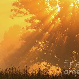 Rachel Cohen - Golden Sunlight Blessings