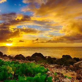 Amanda Jones - Golden Sunset
