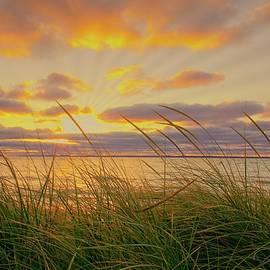 LuAnn Griffin - Golden sunset
