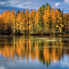David Patterson - Golden Tamarack Reflections