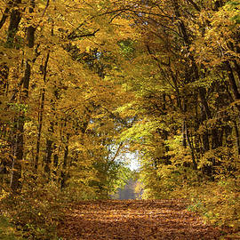 Penny Meyers - Golden Trail