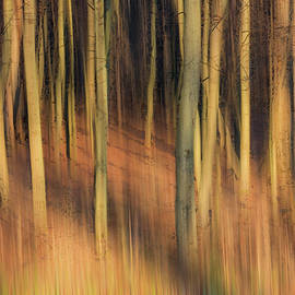 Patti Deters - Golden Forest of Trees Abstract