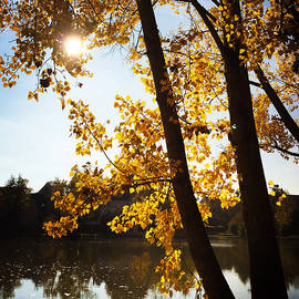 Golden trees in autumn Sindelfingen Germany