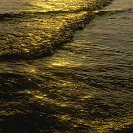 Carol Lloyd - Golden Waves