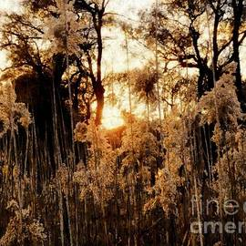 Golden Years   by Janine Riley