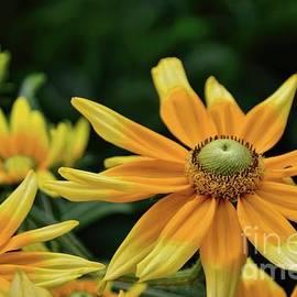 Diana Mary Sharpton - Golden Yellow