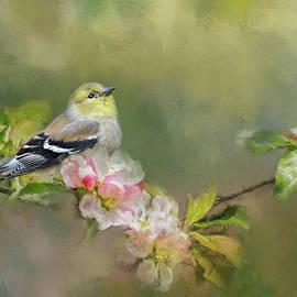 Jai Johnson - Goldfinch In The Garden