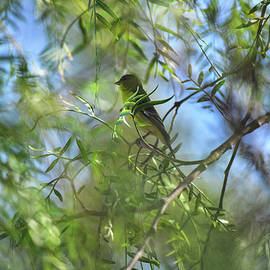 Linda Brody - Goldfinch in the Green Leaves I
