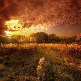 Phil Koch - Gone Far Away Into The Silent Land
