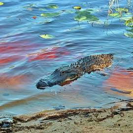 Good Morning Alligator by Cynthia Guinn