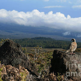 Good Morning Maui by Sharon Mau