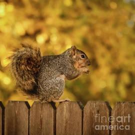 Good Peanut by Robert Bales