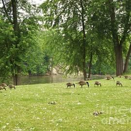 Goose Hill   Kamm Island    Mishawaka Riverwalk          Spring            Indiana by Rory Cubel