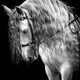 Gorgeous Andalusian by Wes and Dotty Weber