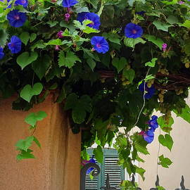 Lainie Wrightson - Gorgeous Morning Glories and Grapes