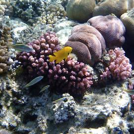Gorgeous Red Sea World 7