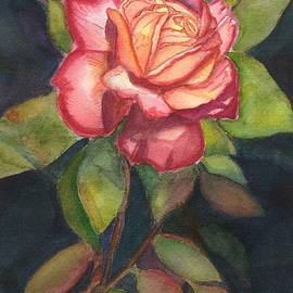 Gorgeous Rose by Eunice Warfel