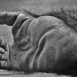 Cynthia Guinn - Gorilla Foot