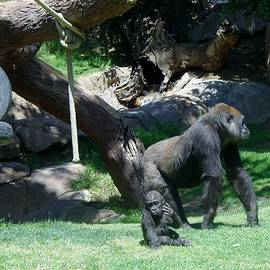 Gorillas Mary Joe Baby And Emonty Mother 7 by Phyllis Spoor