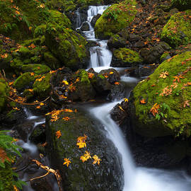 Gorton Creek Autumn by Mike Dawson