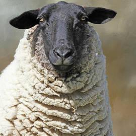 Got Shears ?