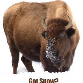 Got Snow? by Greg Norrell