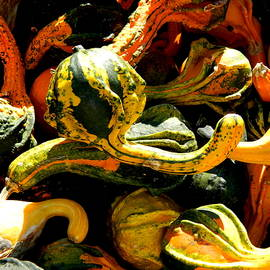 Gourds Galore by Arlane Crump