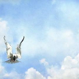 Andrea Kollo - Grace in Flight - The Tern