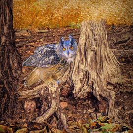 Linda Troski - Grace, The Owl